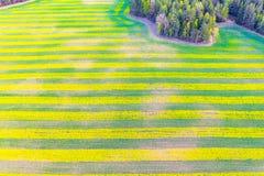 Teste padrão listrado brilhante no campo Couve-nabiça crescente na área rural Paisagem a?rea imagens de stock