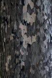 Teste padrão manchado da casca de uma árvore plana Fotos de Stock