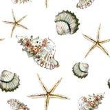 Teste padrão marinho sem emenda com shell e a estrela do mar marrons no branco Imagem de Stock Royalty Free