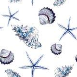 Teste padrão marinho sem emenda com shell e estrela do mar no backgr branco Foto de Stock Royalty Free