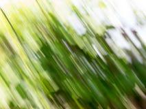 Teste padrão motional da listra verde abstrata Foto de Stock Royalty Free
