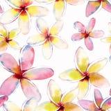 Teste padrão multicolorido bonito bonito tropical erval floral verde bonito brilhante do verão de Havaí do flores amarelas branca ilustração royalty free