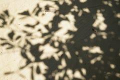 Teste padrão natural abstrato da sombra grande da árvore na luz - estrada macia marrom da superfície da areia da terra do templo  Foto de Stock Royalty Free