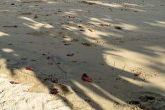 Teste padrão natural abstrato da sombra grande dos ramos de árvore no fundo macio branco da praia da areia com as folhas vermelha imagem de stock royalty free