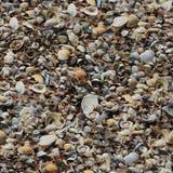 Teste padrão natural sem emenda com várias conchas do mar e alga Fotos de Stock Royalty Free