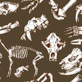Teste padrão pré-histórico esboçado dos animais Escavações da arqueologia, esqueleto e vetor sem emenda dos crânios ilustração do vetor