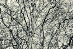 Teste padrão preto e branco de ramos de árvore Fotos de Stock