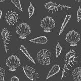 Teste padrão preto e branco do verão com conchas do mar ilustração royalty free