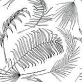 Teste padrão preto e branco sem emenda com as folhas exóticas no fundo branco Imagens de Stock