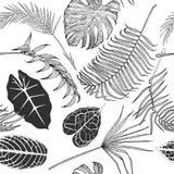 Teste padrão preto e branco sem emenda com folhas exóticas Imagens de Stock Royalty Free