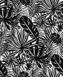 Teste padrão preto na moda sem emenda com folhas de palmeira exóticas em um fundo branco Ilustração botânica do vetor Foto de Stock Royalty Free