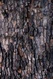 Teste padrão rachado da casca de uma árvore plana Fotografia de Stock