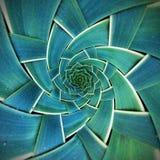 Teste padrão radial da folha Fotografia de Stock Royalty Free