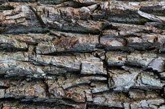 Teste padrão resistido natural com as cavidades profundas horizontais, textura cinzenta da casca de madeira foto de stock royalty free