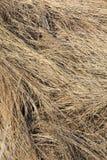 Teste padrão seco da grama selvagem Fotografia de Stock Royalty Free
