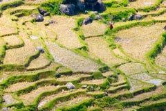 Teste padrão seco das almofadas de arroz imagens de stock royalty free