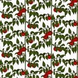 Teste padrão sem emenda arbustos do tomate ilustração royalty free