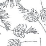 Teste padrão sem emenda botânico do vintage do vetor com folhas de palmeira no en fotografia de stock