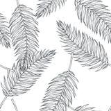 Teste padrão sem emenda botânico do vintage do vetor com folhas de palmeira no en fotos de stock royalty free