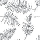 Teste padrão sem emenda botânico do vintage do vetor com folhas de palmeira no en imagem de stock