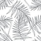 Teste padrão sem emenda botânico do vintage do vetor com folhas de palmeira no en fotografia de stock royalty free