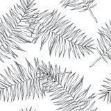 Teste padrão sem emenda botânico do vintage do vetor com folhas de palmeira no en fotos de stock
