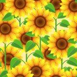Teste padrão sem emenda brilhante com girassóis das flores ilustração do vetor