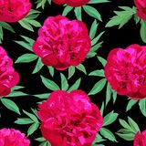 Teste padrão sem emenda brilhante de grandes peônias vermelhas com as folhas verdes no fundo preto ilustração stock