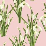 Teste padrão sem emenda com as flores brancas do snowdrop com o ramalhete verde das folhas ilustração royalty free