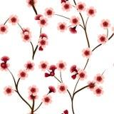 Teste padrão sem emenda com as flores cor-de-rosa da cereja Imagens de Stock Royalty Free