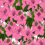 Teste padrão sem emenda com as flores cor-de-rosa exóticas da azálea ilustração do vetor