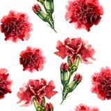 Teste padrão sem emenda com as flores do cravo da aquarela Imagem de Stock Royalty Free
