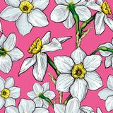 Teste padrão sem emenda com as flores dos narciso Fotos de Stock Royalty Free