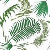 Teste padrão sem emenda com as folhas exóticas no backround branco Fotos de Stock