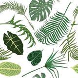 Teste padrão sem emenda com as folhas exóticas no backround branco Imagem de Stock Royalty Free
