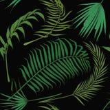 Teste padrão sem emenda com as folhas exóticas no backround preto Fotografia de Stock Royalty Free