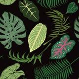 Teste padrão sem emenda com as folhas exóticas no backround preto Fotos de Stock