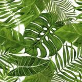Teste padrão sem emenda com as folhas para a tela, o papel de parede, o papel de envolvimento, etc. Aquarela tropical das folhas  ilustração do vetor