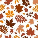 Teste padrão sem emenda com as várias folhas de outono marrons no branco Ilustração do vetor Imagens de Stock