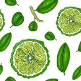 Teste padrão sem emenda com bergamota Vetor colorido do papel de parede Estilo do vintage do esboço da gravura Ilustração desenha ilustração do vetor