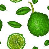 Teste padrão sem emenda com bergamota Vetor colorido do papel de parede Estilo do vintage do esboço da gravura Ilustração desenha ilustração stock