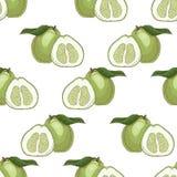 Teste padrão sem emenda com bergamotas ilustração royalty free