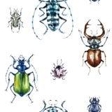 Teste padrão sem emenda com besouros coloridos Fundo do verão e da mola, ilustração da aquarela entomology Grupo dos animais selv ilustração do vetor