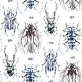 Teste padrão sem emenda com besouros monocromáticos Fundo do verão e da mola, ilustração da aquarela entomology wildlife ilustração stock