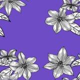 Teste padrão sem emenda com clematite Mão desenhada gráficos ilustração royalty free