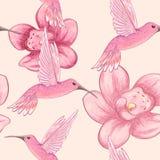 Teste padrão sem emenda com colibris e orquídeas ilustração do vetor