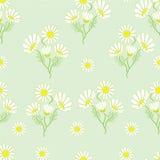 Teste padrão sem emenda com ervas da camomila Fotografia de Stock