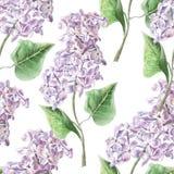Teste padrão sem emenda com flor lilás Fotos de Stock