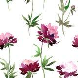 Teste padrão sem emenda com flores da peônia Foto de Stock