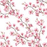 Teste padrão sem emenda com flores de cerejeira Ilustração da aguarela Imagens de Stock